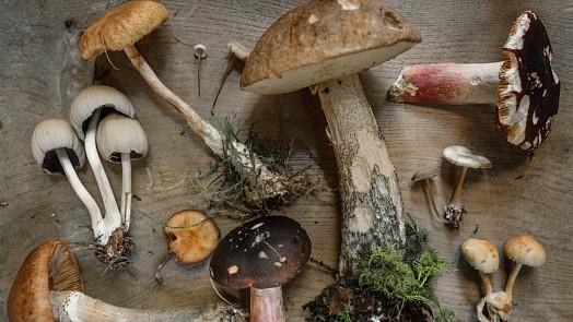 Co se zásobami hub? Zkuste rychlou smaženici, tradiční kulajdu nebo bedlové řízky