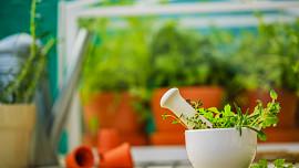 Blahodárné bylinky by měly patřit do každé kuchyňky