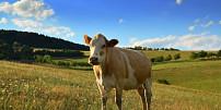 Čerstvé pečivo a bio-mléčné výrobky z EKOFARMY JAVORNÍK s dovozem přímo do domu