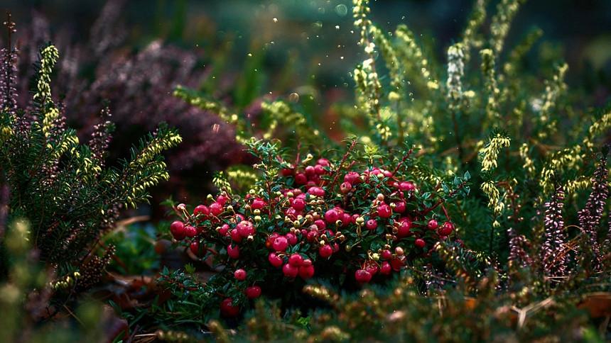 Zdroj: Pixabay.com, phamphuonglinh