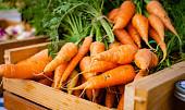 Zlepší zrak a pomůže se zácpou i na průjem: 7 dobrých důvodů, proč jíst mrkev
