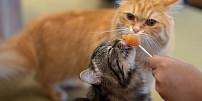 Recepty pro kočky: Zahoďte granule a potěšte čtyřnohého mazlíka pořádným jídlem