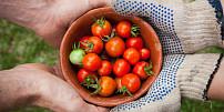 První zeleninová pomoc: Na sluncem spálenou kůži pomůže rajče, na hmyzí bodnutí cibule