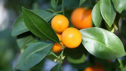 Exotické ovoce, které si můžete vypěstovat sami!
