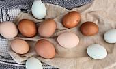 Lexikon vajec: Už jste ochutnali obří pštrosí, delikátní křepelčí nebo zakázané kachní?