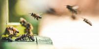 Vracíme včely do přírody. Bez nich by ze světa zmizely tři čtvrtiny potravin