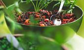 Červená na hubnutí, černá proti stárnutí: Zkuste snadné čočkové recepty pro štíhlou linii