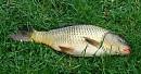 Ryby a čo s nimi