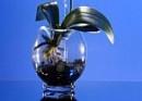 Dopřejte si něco víc než vázu: Klima vázu...