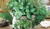 Lékárna v květináči a jiné rady do kuchyně i pro zdraví