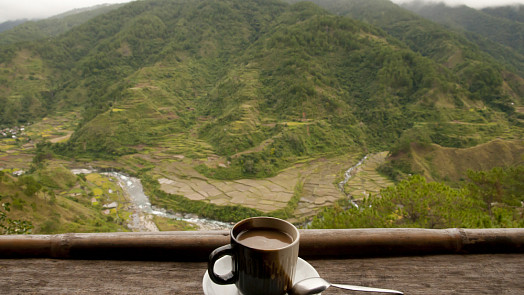 Ochutnejte nejvzácnější kávu světa - cibetkovou Kopi Luwak