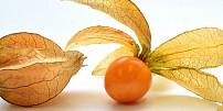 Mochyně je plná vitamínu C. Jak ji vypěstovat doma a který druh vás může otrávit?
