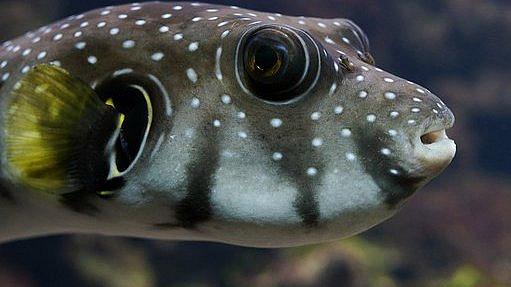 Gurmánem až za hrob: Ochutnali byste rybu nebo fazole, které vás mohou zabít?