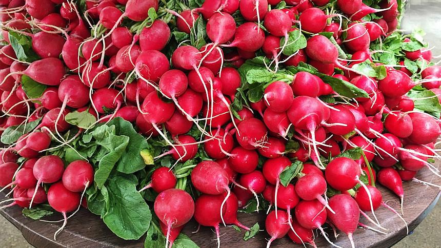 Ředkvičky jsou poslové jara. Pikantní zelenina původem z Asie vás osvěží i ozdraví