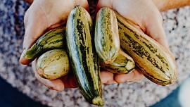 Letní zelenina pro lazary a dietáře: Zázračná cuketa čistí tělo a pomáhá proti otokům