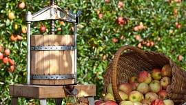 Kupte si čerstvé ovoce a zeleninu