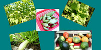 Zelenina menej známa