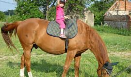 Já a koně