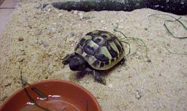 Naše želva Žofí