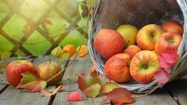 Rady pro uskladnění jablek. Jak je uchovat přes zimu?
