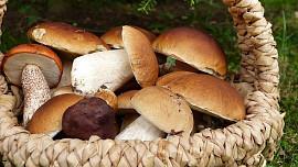 Jak dlouho vařit houby, aby se nestaly příčinou nevolnosti či lehké otravy