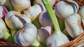 Jak správně uchovat česnek, aby vydržel co nejdéle lahodný a voňavý