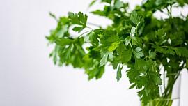 Kuchyňské bylinky mají všestranné využití. Jak je správně sbírat a sušit?