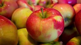 Jablka můžeme uchovat i zpracovat mnoha způsoby