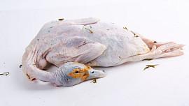 Kachní maso (kachna)
