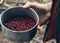 Ovoce lesní