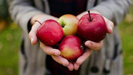 Sladké i slané jablečné dobroty - uchování a zpracování jablek