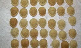 Moje první ořechy