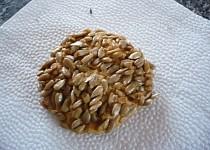 Slunečnicové sušenky