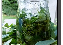Bylinky v oleji (bazalka, oregano)