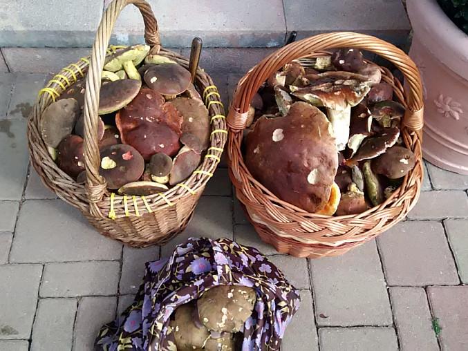 Bramborové knedlíky plněné houbami, Čerstvá úroda