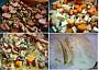 uzenina+ml.maso;zeleninový základ;zalité vývarem;příloha-knedlík